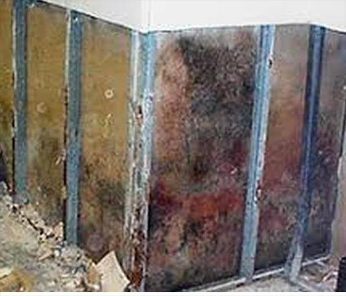 Commercial Commercial Building Mold